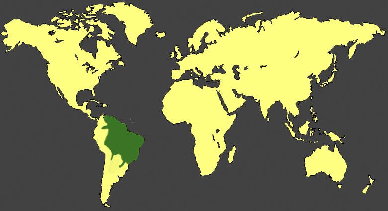 planisphère coendou