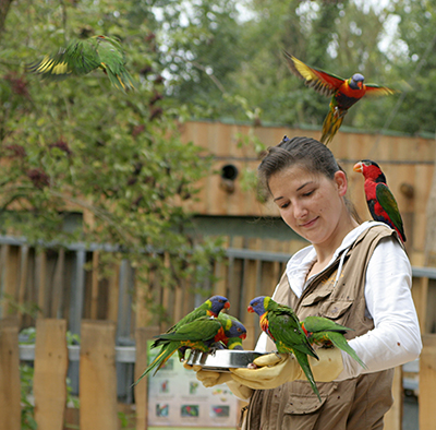 Feed the lorikeets inside the Oceanian aviary