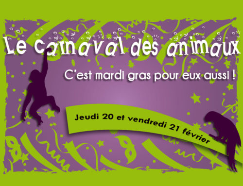 On Thursday, 20th and Friday , 21st of February : The Carnival of animals