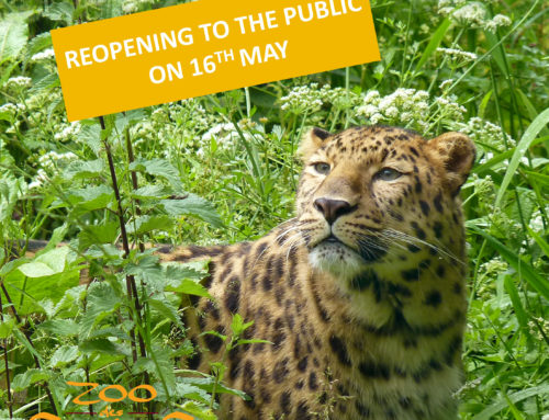 Reopening of the zoo on saturday 16th May !