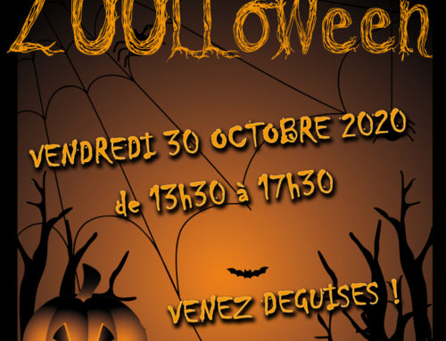 ZOOLLOWEEN, Friday 30th October 2020