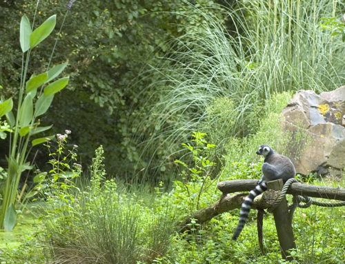 Le Zoo des Sables d'Olonne rejoint la coalition mondiale unis pour la biodiversité